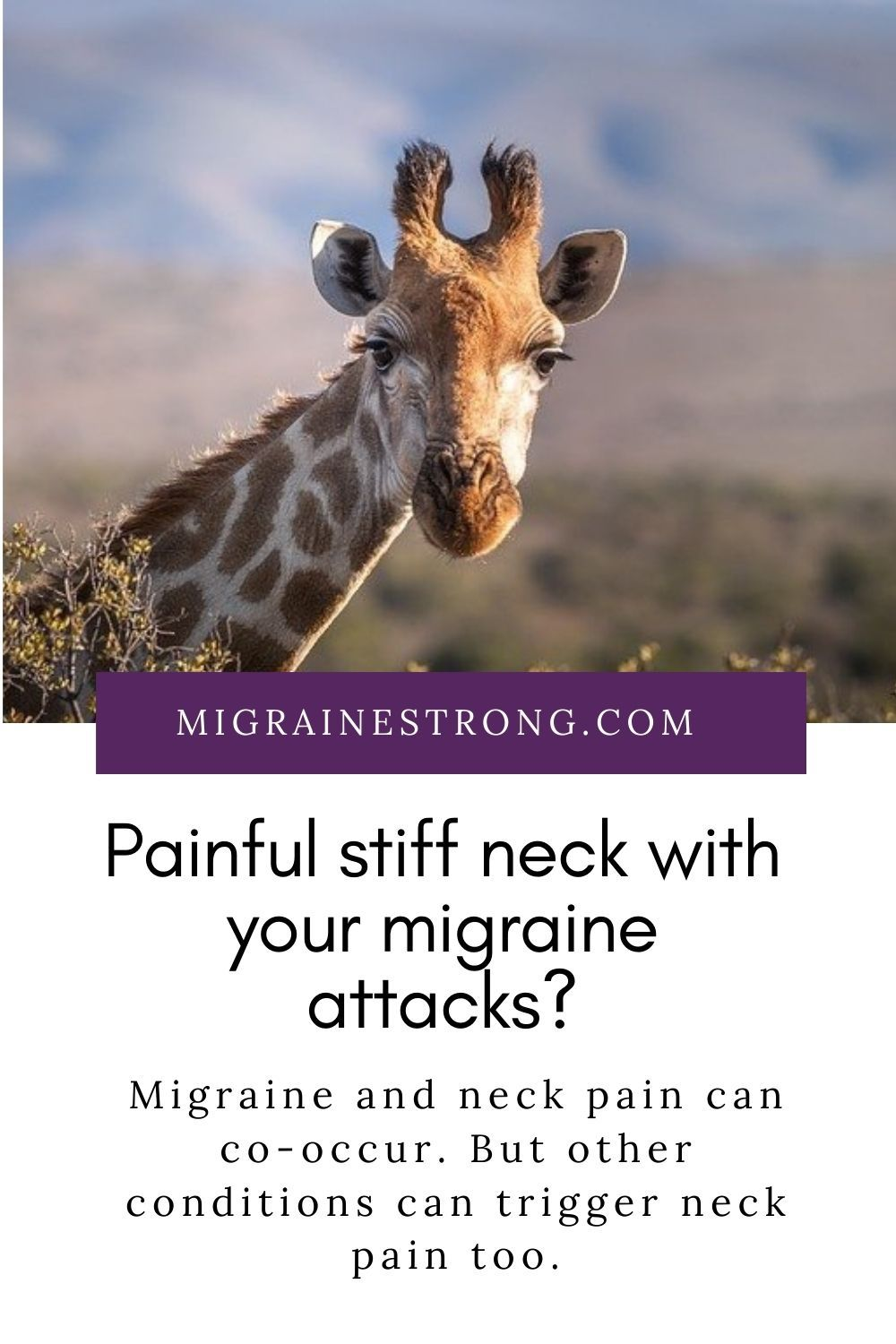 Painful stiff neck with your migraine attacks?